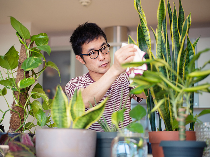 3 reasons why the growing plant is a great relief of stress