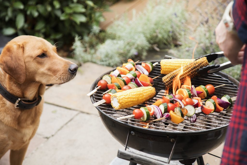 side effects of Barbecue Salt on dogs