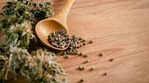 How to Buy Discounted Marijuana Seeds